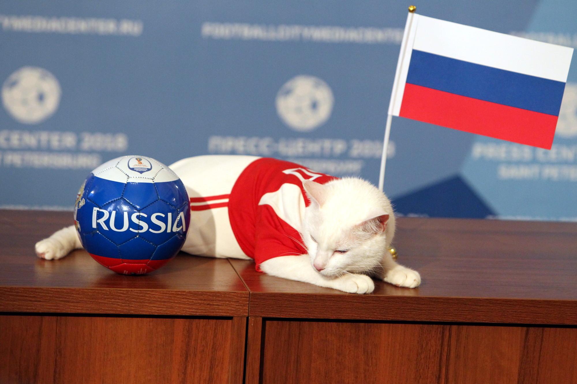 все с днем россии коты течение одного дня
